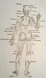 Massage ayurvédique marmathérapie